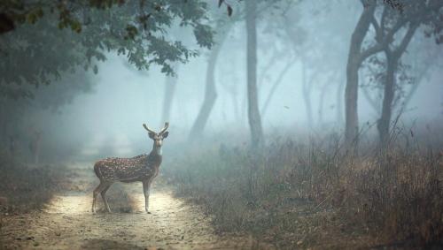 Dudhwa-deer-in-fairytale